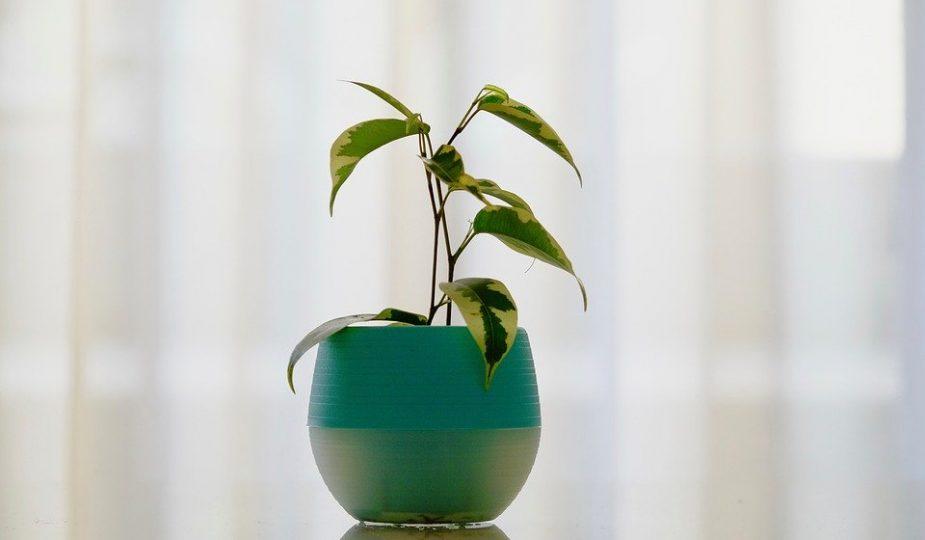 3 Tekenen dat je jouw plant moet verpotten