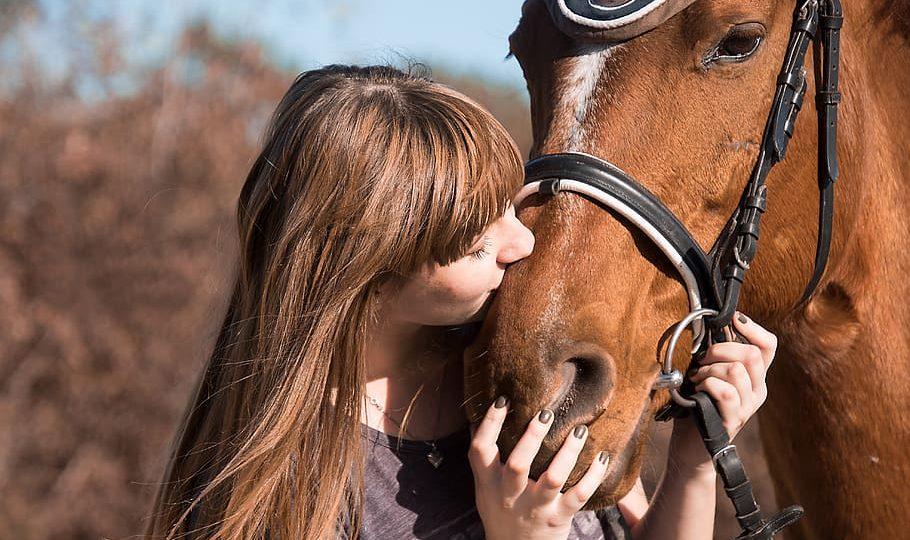Een eigen paard